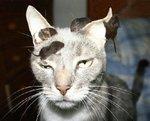 Hero meow mix