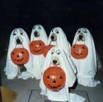Halloween costume dog