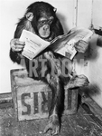 Chimp pics1