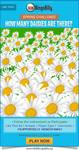 Nbb flowers