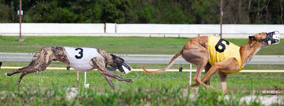 Mobile greyhound park 3