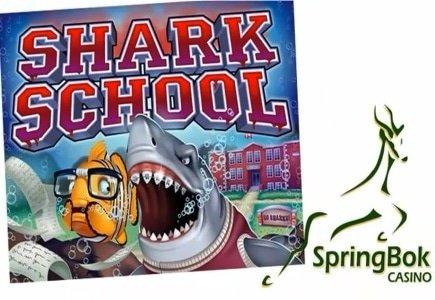 Attend Shark School at Springbok Casino