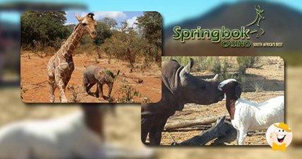 Springbok casino brings awareness to poaching during animal friendship month