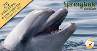 Dolphin Awareness Free Spins at Springbok Casino