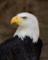 p66 avatar